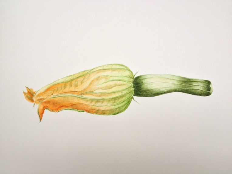 What a beautiful little Courgette. Watercolour