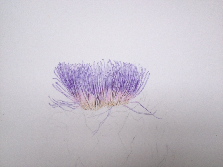 Globe artichoke before its haircut. Coloured pencil and no embossing tool.