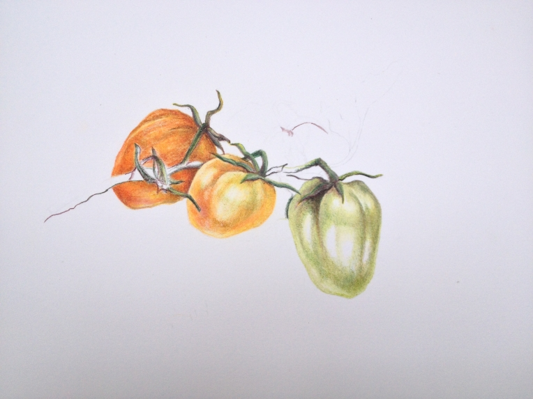 Home grown tomatoes - but not from my garden. Coloured pencil.