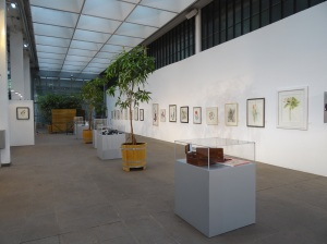 The long wall in the Palm house and vitrines down the centre containing the prizes mentioned on the SBA facebook page, jewellary  by Lesley Hall and Glassware by Jacqueline Allwood.
