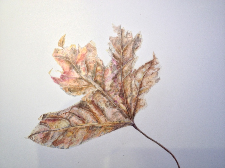 Horse chestnut leaf