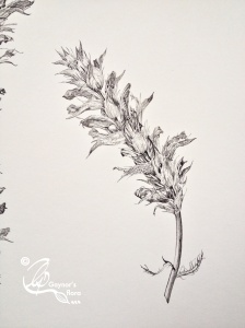 Acanthus 3 Pen & Ink
