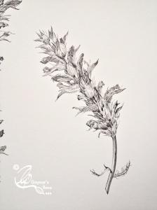 Acanthus 3 Pen & Ink