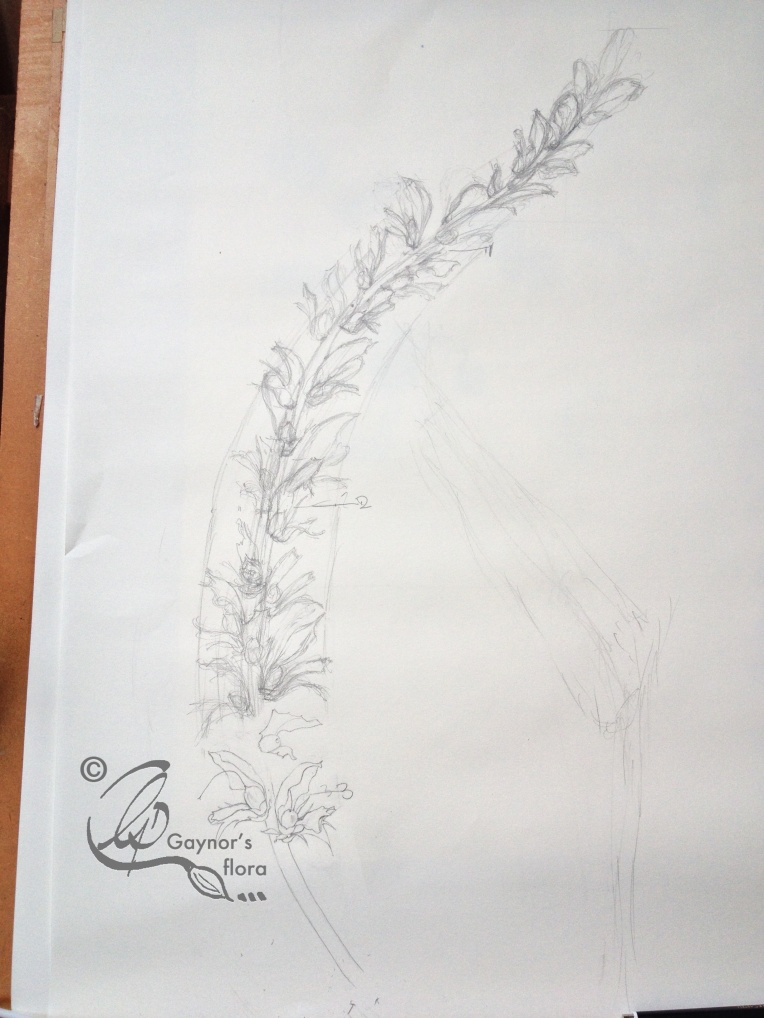 The start of the initial sketch