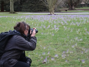 Capturing crocii on camera to take home to the Norwegian winter.