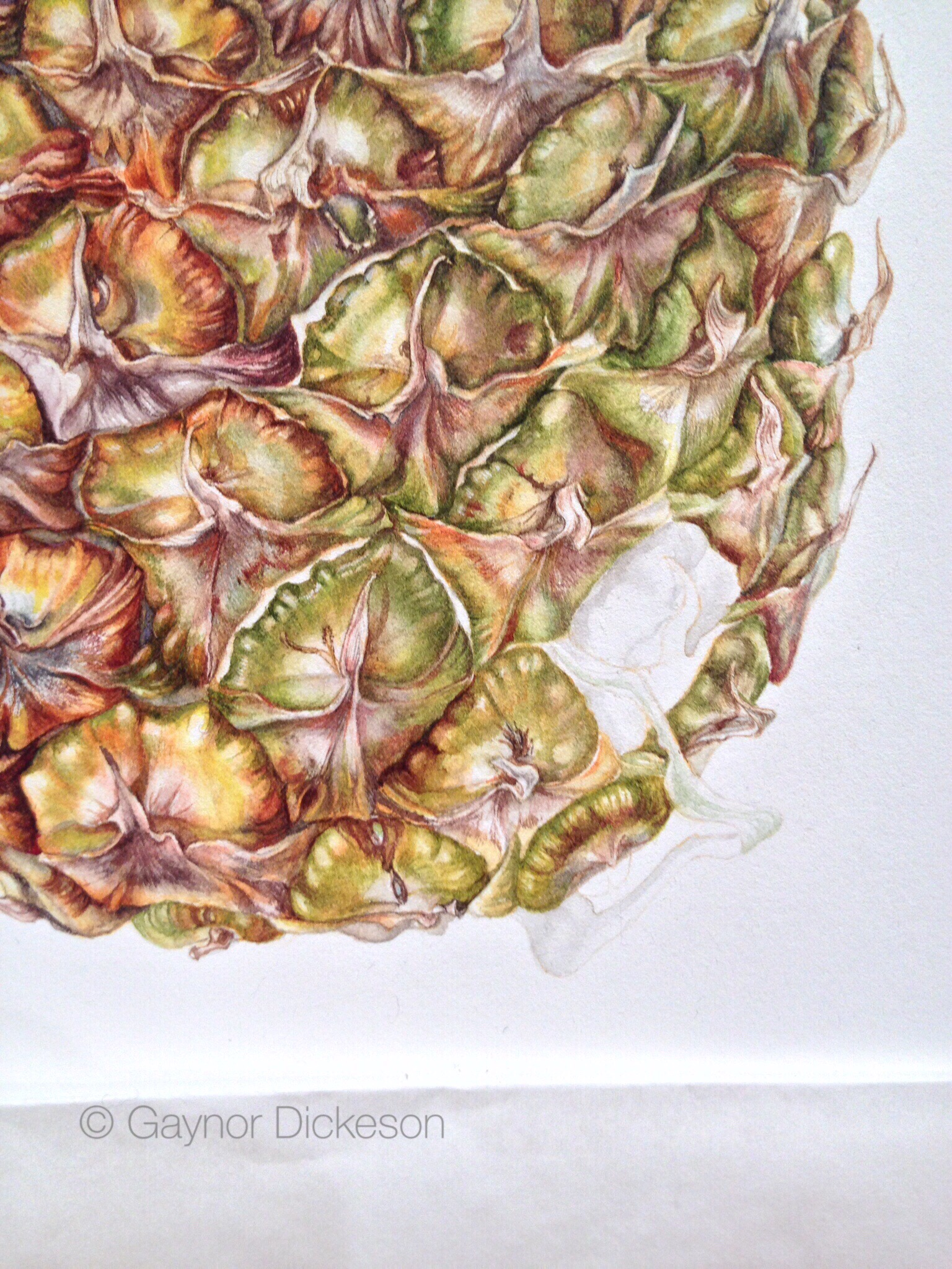 pineapple painting. The Pineapple And Arrival Of Rory McEwen Vellum Painting