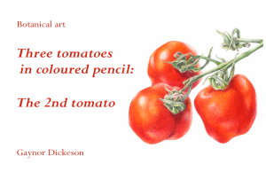 three-tomatoes-2nd-tomato