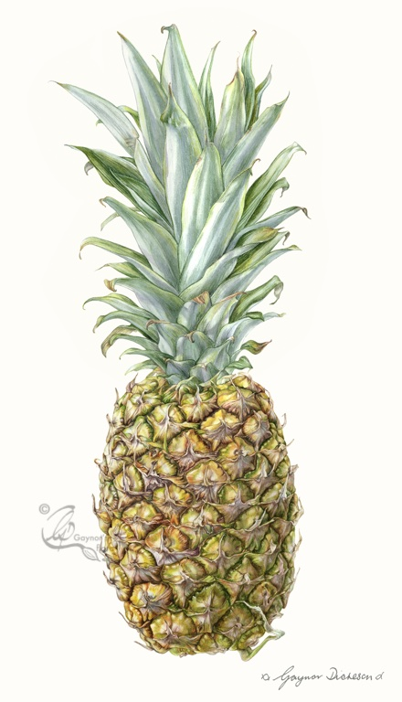 Pineapple Gaynorsflora