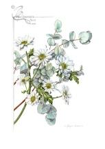 Eucalyptus and white Chrysanthemum