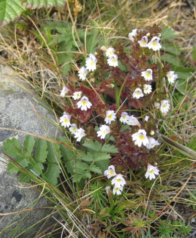 Flora from Mølen