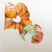 Pumpkins - coloured pencil