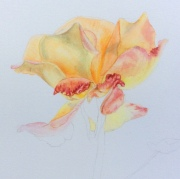 Autumn's last Rose - watercolour