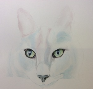'Tigger', a Russian Blue in Pink, with green eyes! Watercolour.