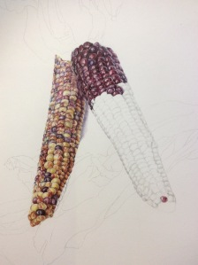 A long - haul 'Indian corn' in coloured pencil.