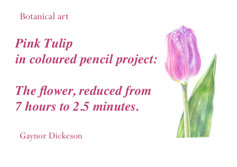 Pink tulip CP flower fast